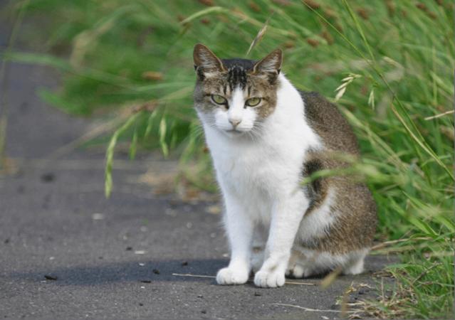 野良猫のイメージ画像